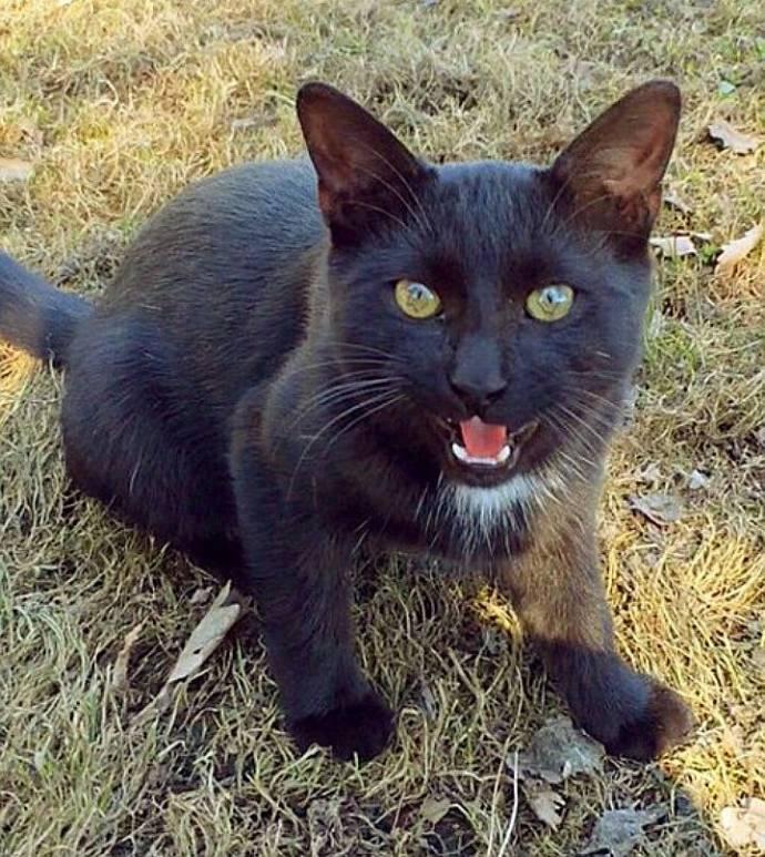 Кота-хулигана выселили из Ботанического сада МГУ в новый дом