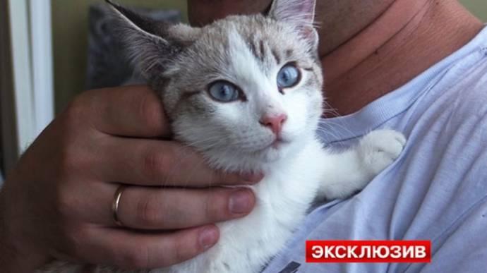 В Новосибирске котенок выжил, упав с 19 этажа на автомобиль