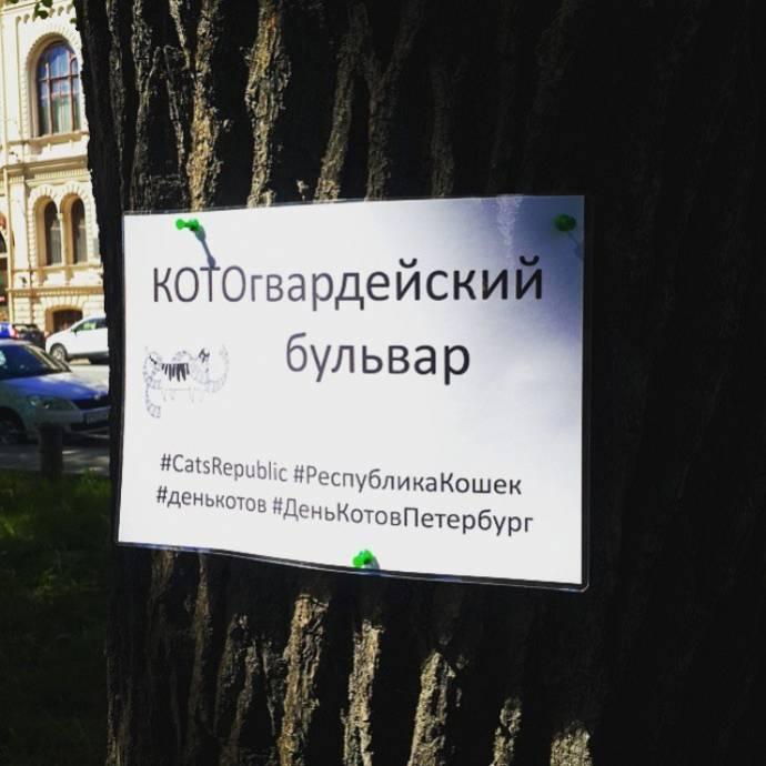 В Санкт-Петербурге отметили Всемирный день петербургских кошек и котов