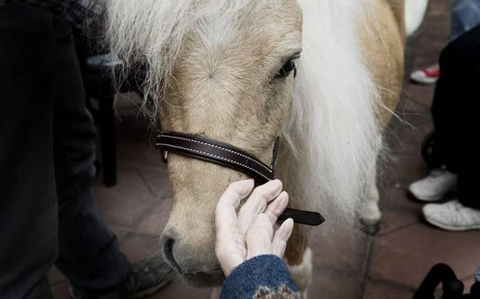 Пони-терапия в шведском доме престарелых