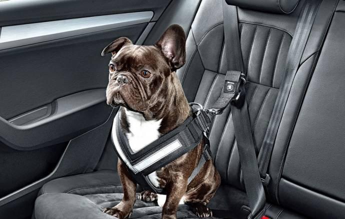 Предприятие Skoda представила ремень безопасности для собак