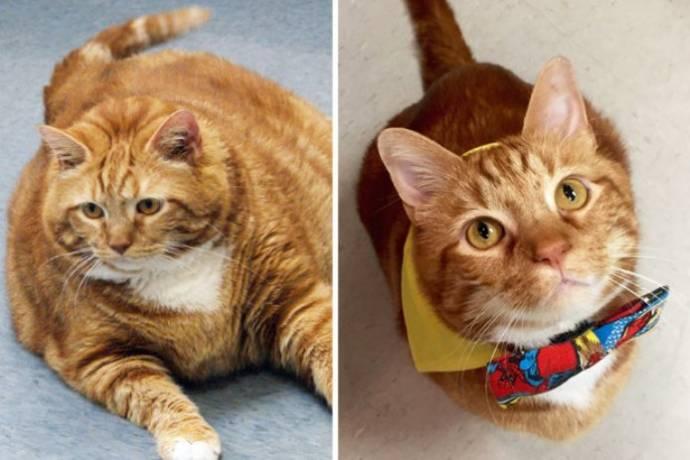 Толстый кот по кличке Тощий похудел на 10 килограммов