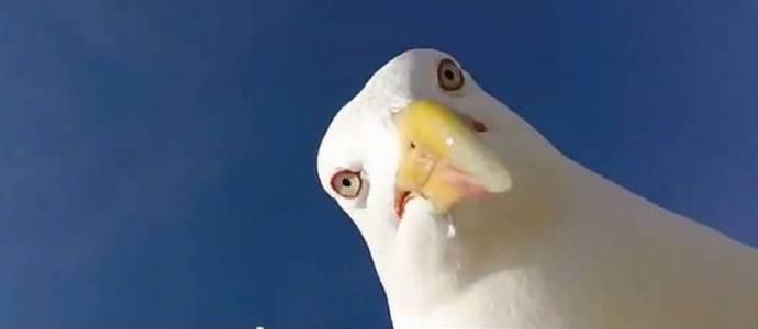 Чайка стащила камеру и сделала селфи