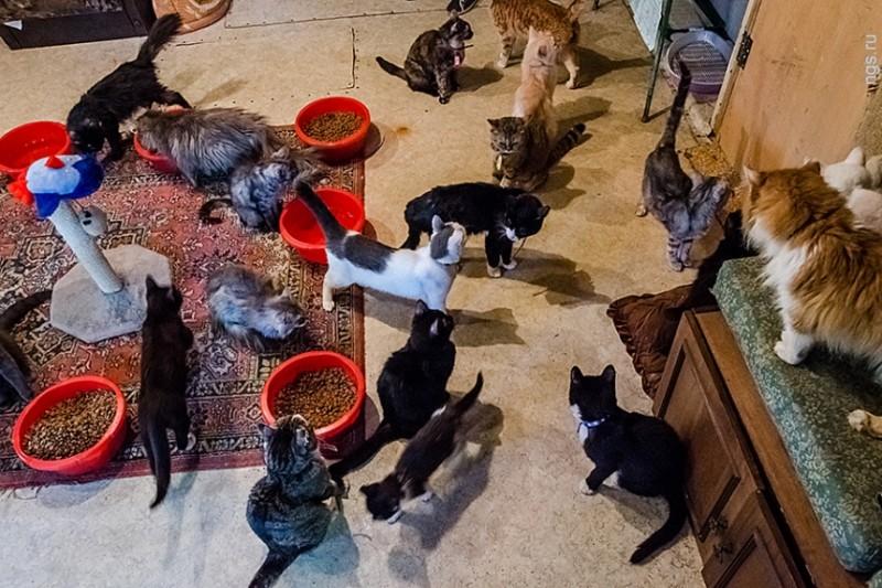 Жительница Новосибирска сняла отдельный дом для полусотни спасенных кошек