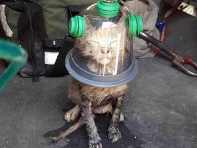 Пожарные спасли котенка при помощи специальной кислородной маски