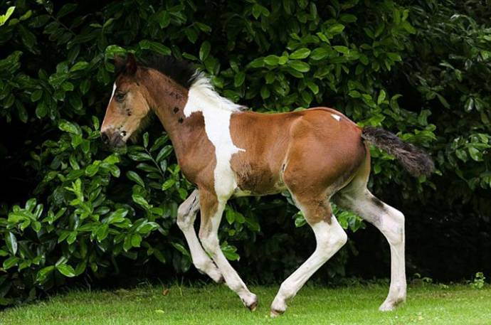 Жеребёнок родился с пятном в виде коня