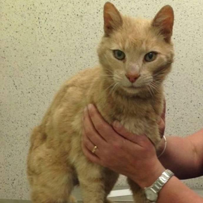 Пропавший 15 лет назад в Австралии кот нашелся в Северной Ирландии