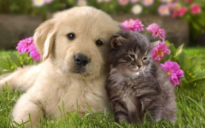Испанский Тригерос-дель-Валье уравнял в правах домашних животных и людей