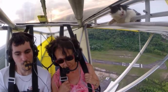 Кот случайно оказался на борту небольшого самолета и прославился на весь мир