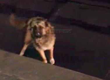 В московском метро полицейский спас собаку, упавшую на пути