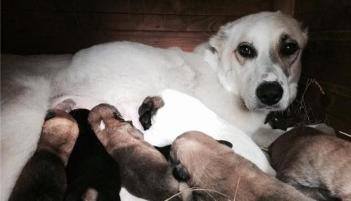 В Калиниграде спасли собаку с щенками, которых хозяин хотел утопить