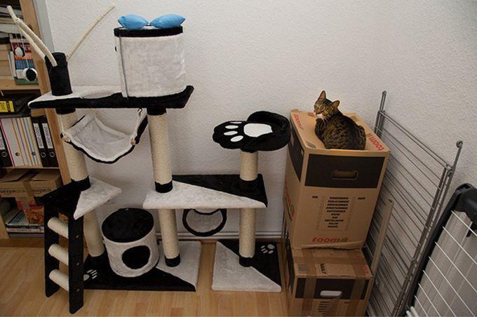Забавные примери железной кошачьей логики