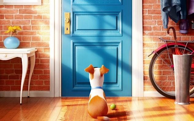 Что делают домашние питомцы, когда хозяева уходят