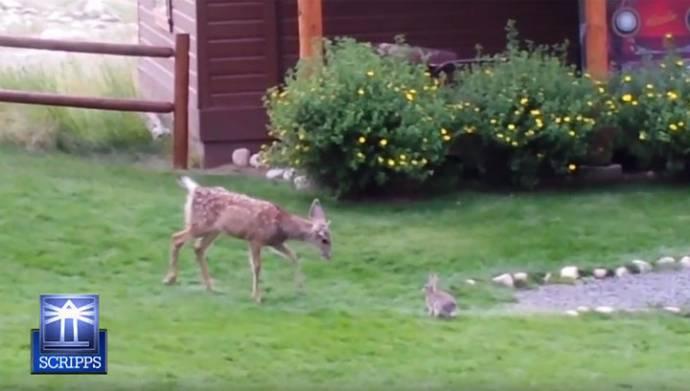 Кролик и оленёнок играют вместе как в мультфильме