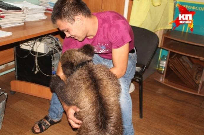 На улице Читы нашли 4-месячного медвежонка