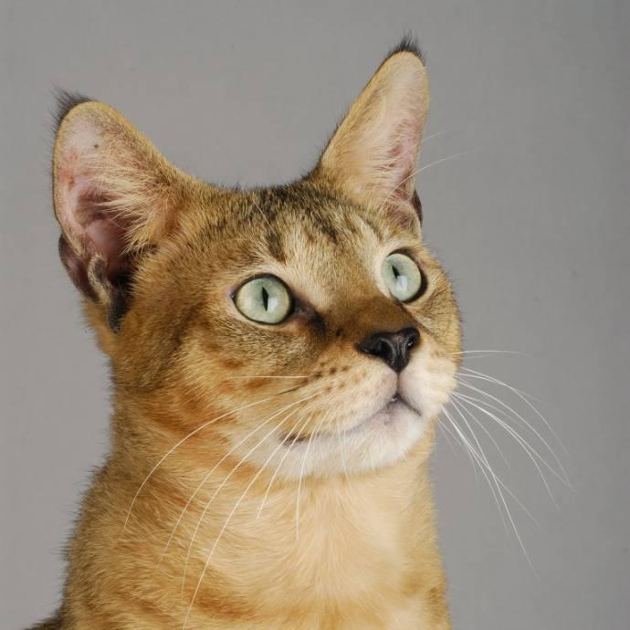 Ученые выяснили, почему зрачки кошек похожи на вертикальные щели