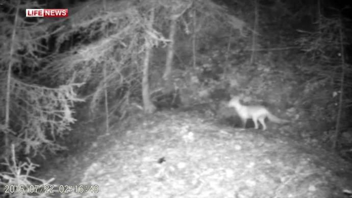 В одной норе живут лиса, барсуки, выдра, соболь и норка