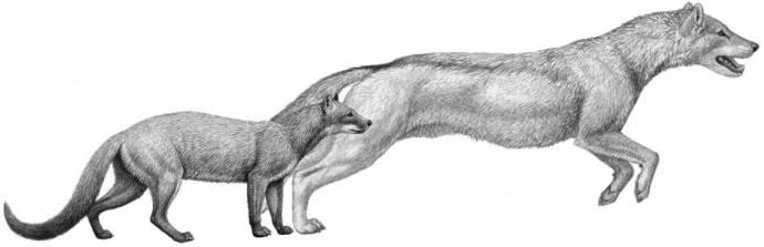 Древние собаки обликом очень походили на кошек