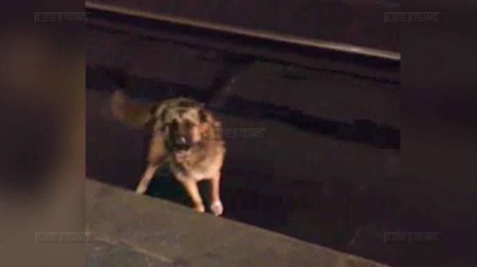 В метро полицейский спас собаку, упавшую на пути