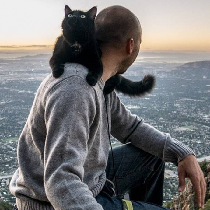 Кошки, которые любят путешествовать больше, чем вы