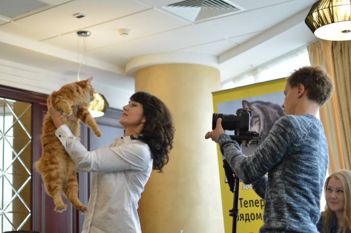 В Екатеринбурге откроют котокафе и кошачий йога-центр