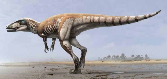 Найден крупнейший австралийский хищный динозавр