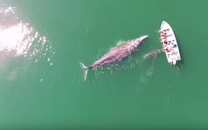 Огромные киты подплыли к туристам