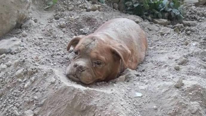 Француз спас похороненную заживо собаку