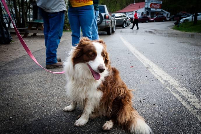 За пост президента США поборется собака-мэр города