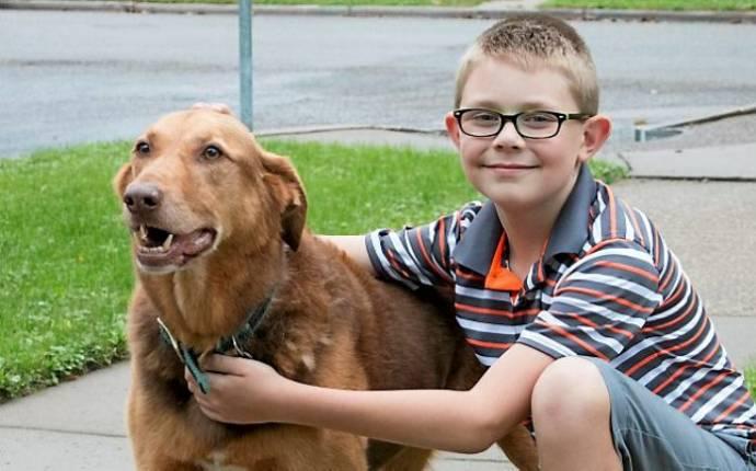 Школьник из США отдал личные деньги на покупку бронежилетов для собак