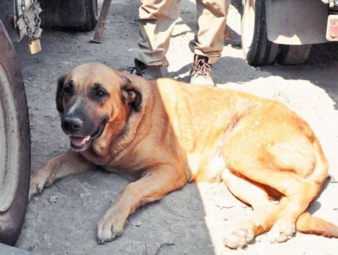 В Чили собака кормила мальчика, про которого забыла пьющая мать