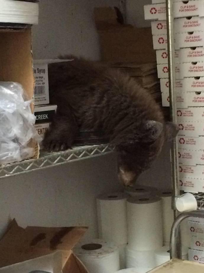 Голодный медвежонок залез в американскую пиццерию и заснул