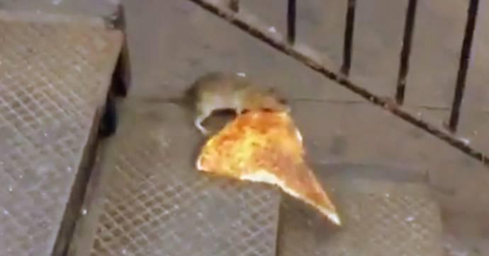 В Нью-Йорке укравшая кусок пиццы крыса стала героем соцсетей