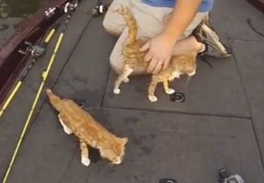 Двое американцев пошли на рыбалку, а выловили...двух котят
