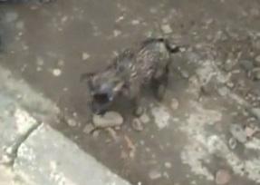 В Красноярске парни спасли щенка, упавшего в канализацию