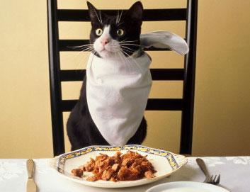 Стоит ли кормить кошку индейкой?