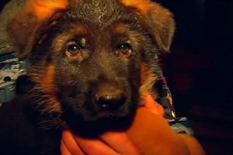 Жителей Франции растрогал щенок Добрыня, подаренный Россией