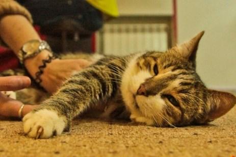 В воронежском котокафе поселились котики с тяжелыми судьбами