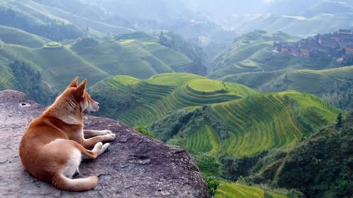 Когда и где одомашнили собак?