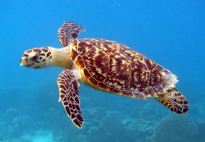 Биологи обнаружили светящихся морских черепах