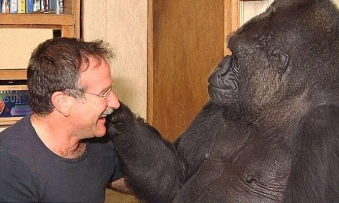 Знаменитая горилла Коко