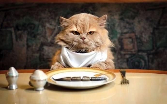 Почему кошки очень привередливы в еде?