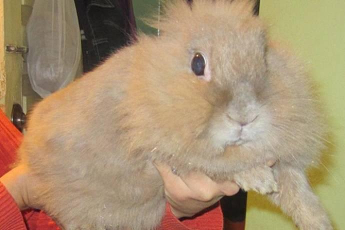 Домашний кролик предупредил семью об утечке газа