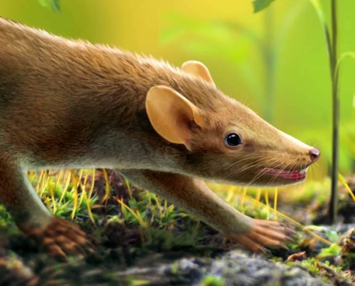 Ученые нашли древнейшего пушистого зверя