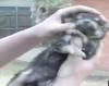 Маленького щенка спасли из трещины в земле
