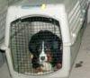 500 собак и щенков спасли в Канаде
