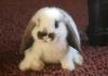 Домашний кролик спас хозяев от пожара