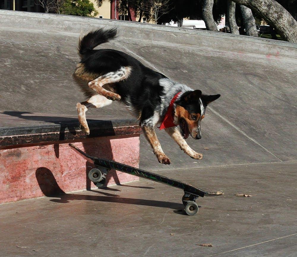 видеоурок как научиться прыгать на скейте