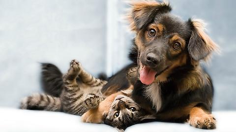 Собаки любят хозяев в пять раз больше, чем кошки