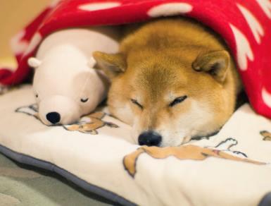 Пес Мару и любимая игрушка